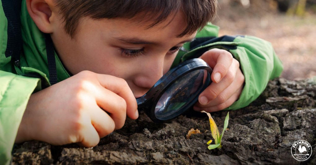A boy looks curiously at a little sapling through a magnifying glass