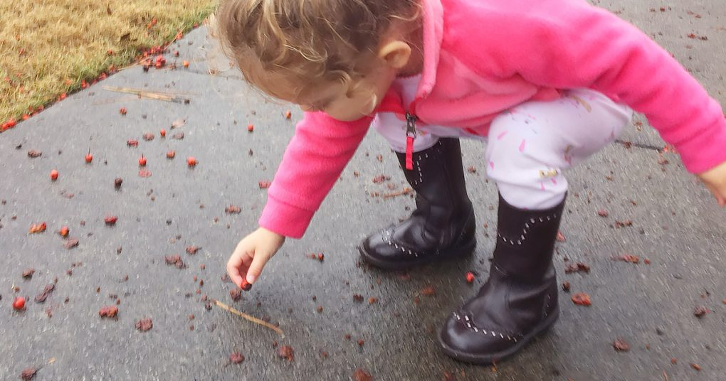 Young child picking up fallen berries from a sidewalk