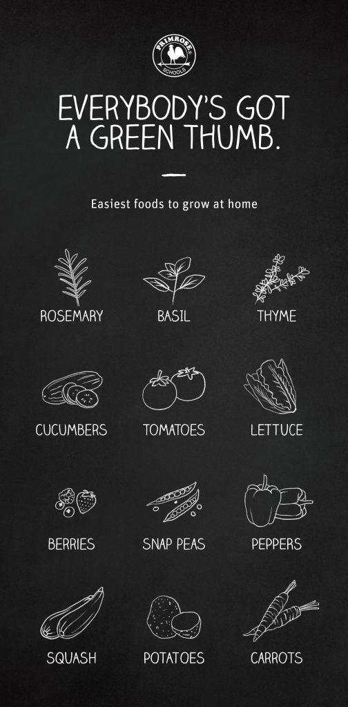Primrose Family Gardening Guide