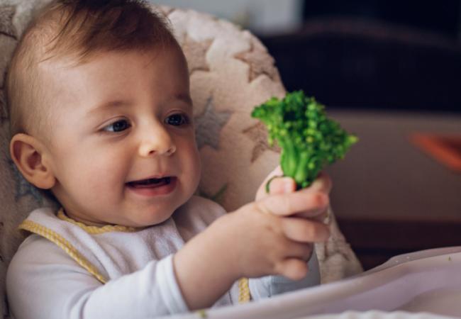 Toddler eating broccoli